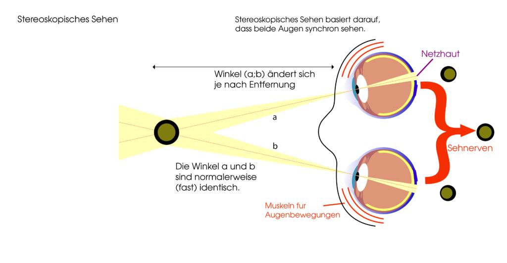 Räumliches Sehen - Stereoskopisches Sehen